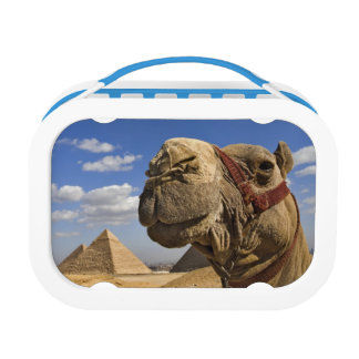 Camel in front of the pyramids of Giza, Egypt, Lunch Box