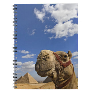Camel in front of the pyramids of Giza, Egypt, Notebook