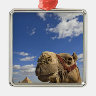 Camel in front of the pyramids of Giza, Egypt, Silver-Colored Square Decoration