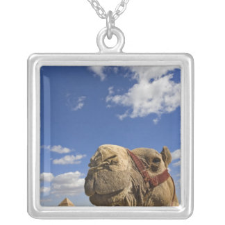 Camel in front of the pyramids of Giza, Egypt, Silver Plated Necklace