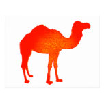 Camel in Red
