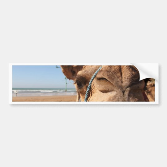 camel kiss bumper sticker