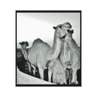 Camel Love Canvas Print