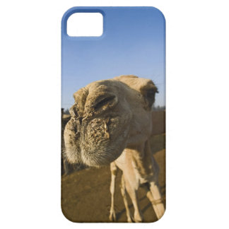 Camel market, Cairo, Egypt Barely There iPhone 5 Case
