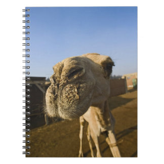 Camel market, Cairo, Egypt Notebook