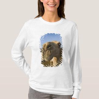 Camel market, Cairo, Egypt T-Shirt