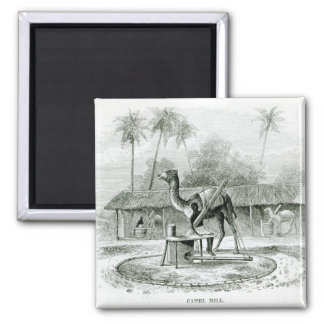 Camel Mill, from 'Travels in Africa' Square Magnet