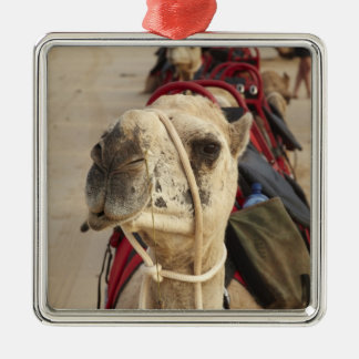 Camel on Cable Beach, Broome Christmas Ornament