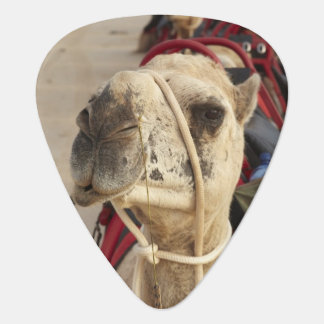 Camel on Cable Beach, Broome Guitar Pick