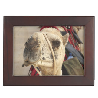 Camel on Cable Beach, Broome Keepsake Box