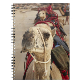 Camel on Cable Beach, Broome Notebooks