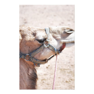 Camel Personalised Stationery