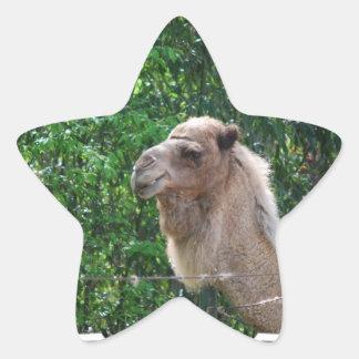 Camel Photo Design Sticker