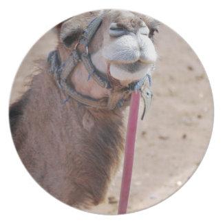 Camel Plate