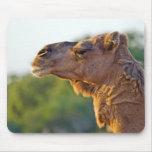 Camel Portrait Mouse Pad