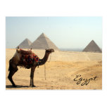 camel pyramid