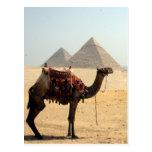 camel pyramids postcards