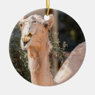 Camel staring while chewing christmas ornament