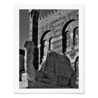 Camel Thoughts Photo Print