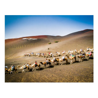 Camel Train in Lanzarote Postcard