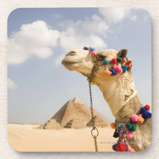 Camel with Pyramids Giza, Egypt Coaster