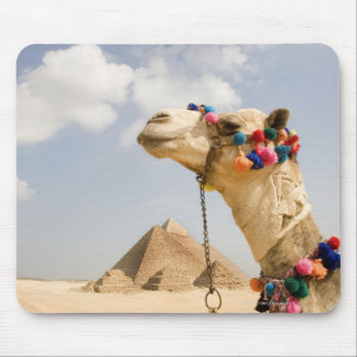 Camel with Pyramids Giza, Egypt Mouse Pad