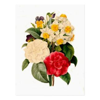 Camelias,Narcissus and Violas Postcard