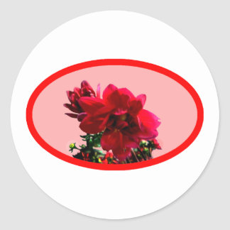 Camellia bg Pink The MUSEUM Zazzle Gifts Round Sticker