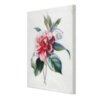 Camellia Canvas Print