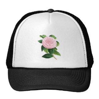 Camellia, Duchesse De Nassau Mesh Hat