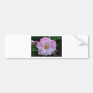 Camellia flower in bloom bumper sticker