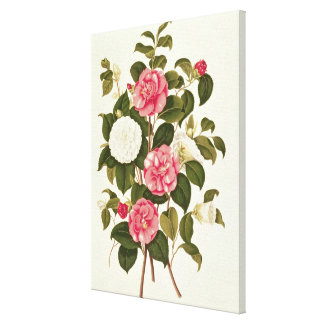 """Camellia  from """"A Monograph on the Genus' Canvas Print"""