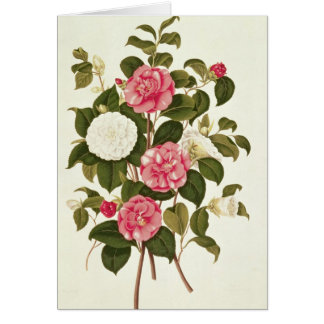 "Camellia  from ""A Monograph on the Genus' Card"