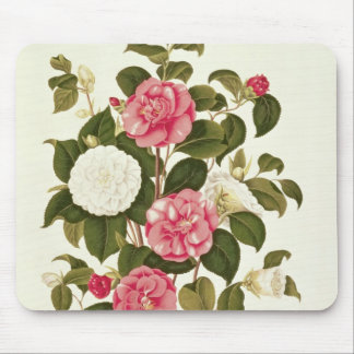 "Camellia  from ""A Monograph on the Genus' Mouse Mat"