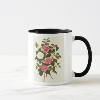 """Camellia  from """"A Monograph on the Genus' Mug"""