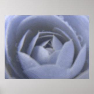 Camellia Frozen Beauty Print
