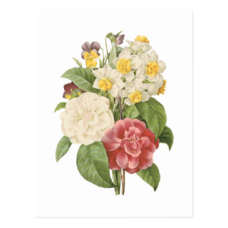 camellia narcissus pansy by Redouté Postcards