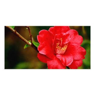 Camellia Photo Card Template