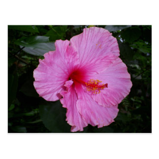 camellia postcard