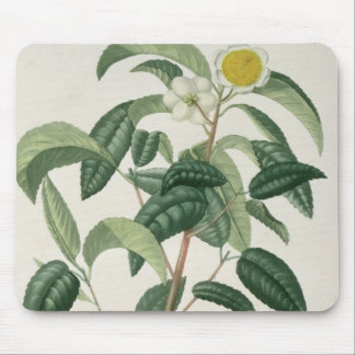 Camellia Thea from 'Phytographie Medicale' by Jose Mouse Mat