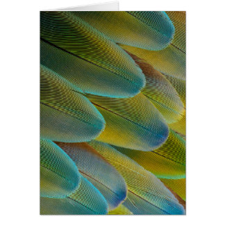 Camelot Macaw Feather Design Card