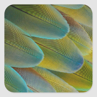 Camelot Macaw Feather Design Square Sticker