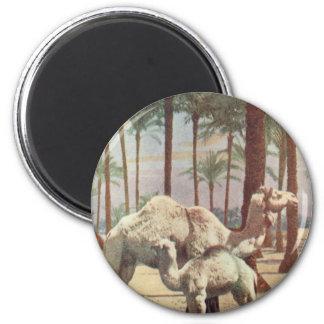 Camels 6 Cm Round Magnet