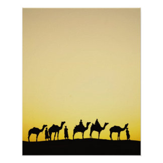 Camels and camel driver silhouetted at sunset, 4 poster