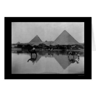 Camels and Pyramids in Egypt 1899 Card