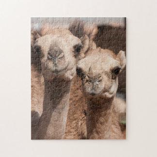 Camels at the Camel market in Al Ain near Dubai Jigsaw Puzzle
