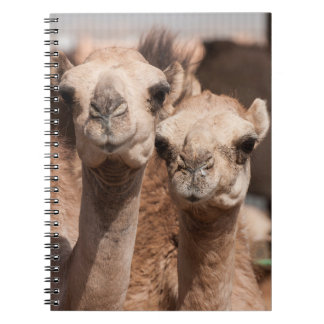 Camels at the Camel market in Al Ain near Dubai Notebook
