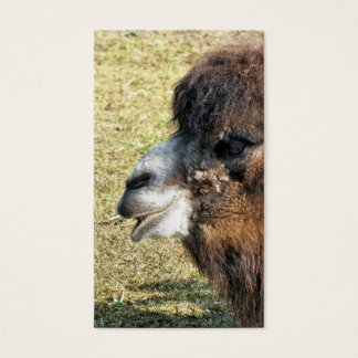 CAMELS BUSINESS CARD