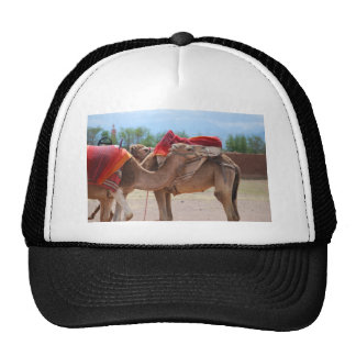 Camels Cap