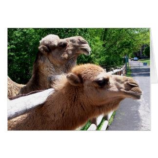 Camels Card